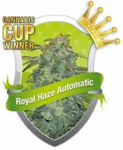 Royal Haze auto